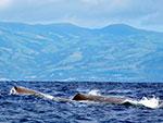 Синие киты