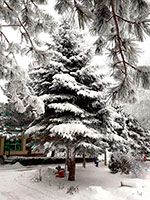 Санаторий Лесной, Железноводск
