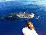Наблюдение за китами