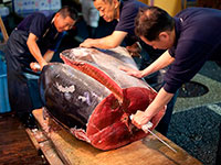 Рыбный рынок Цукидзи